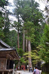 temple-rinnaji-3