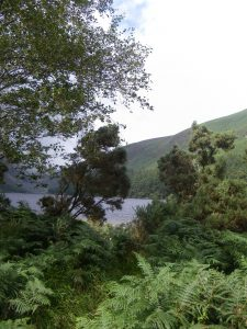 Wicklow NP