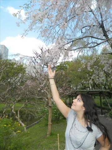 Sous les cerisiers