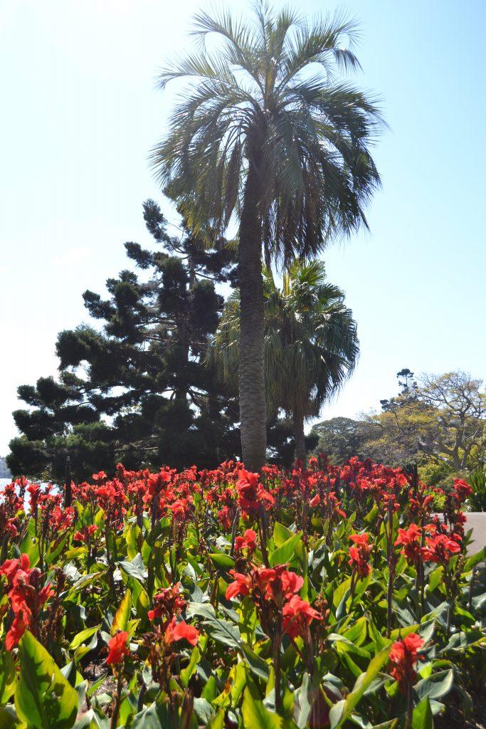 royal-botanic-garden-5