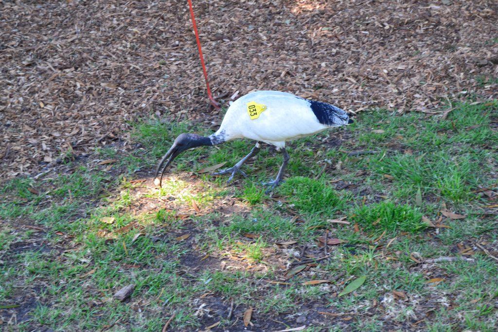 royal-botanic-garden-oiseau