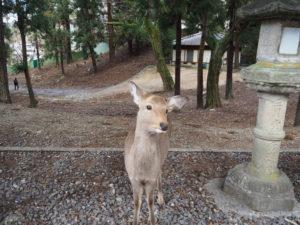 biches de Nara