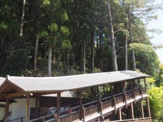 pont pour accéder au bouddha
