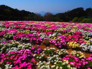 l'ile à fleur