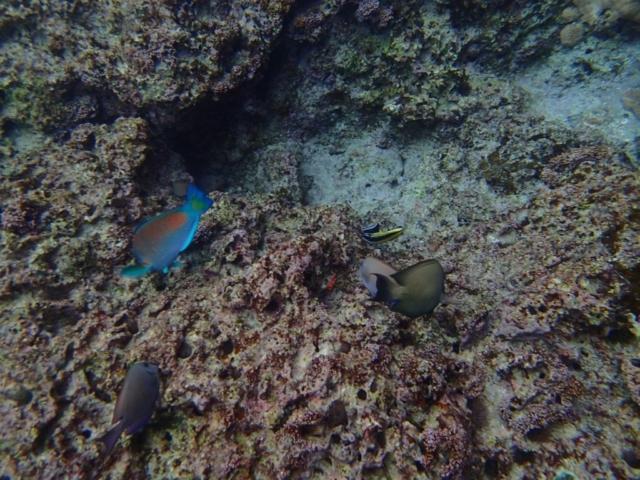 poissons colorés