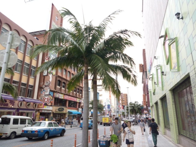 entre rue américaine et palmiers