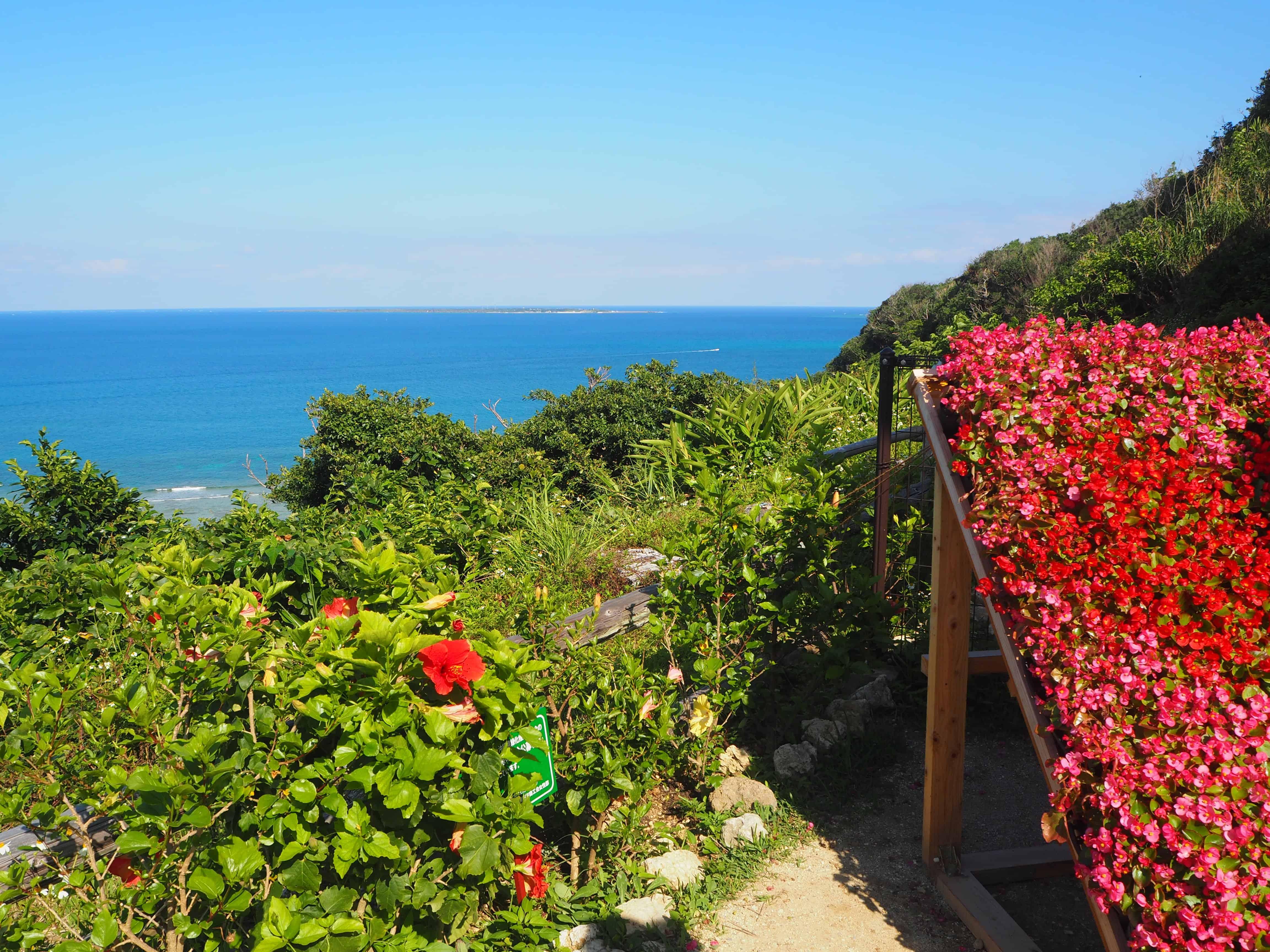 des fleurs et vue sur la mer