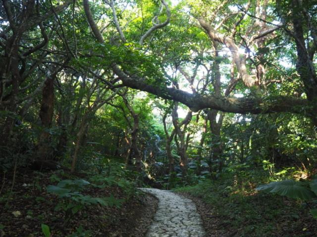 passage dans la forêt