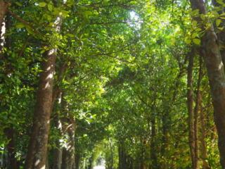 allée sous les arbres