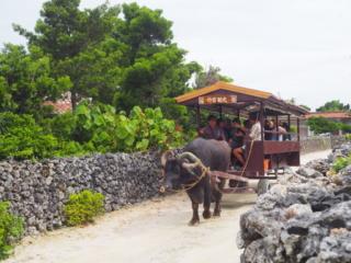 tour de l'île en buffle