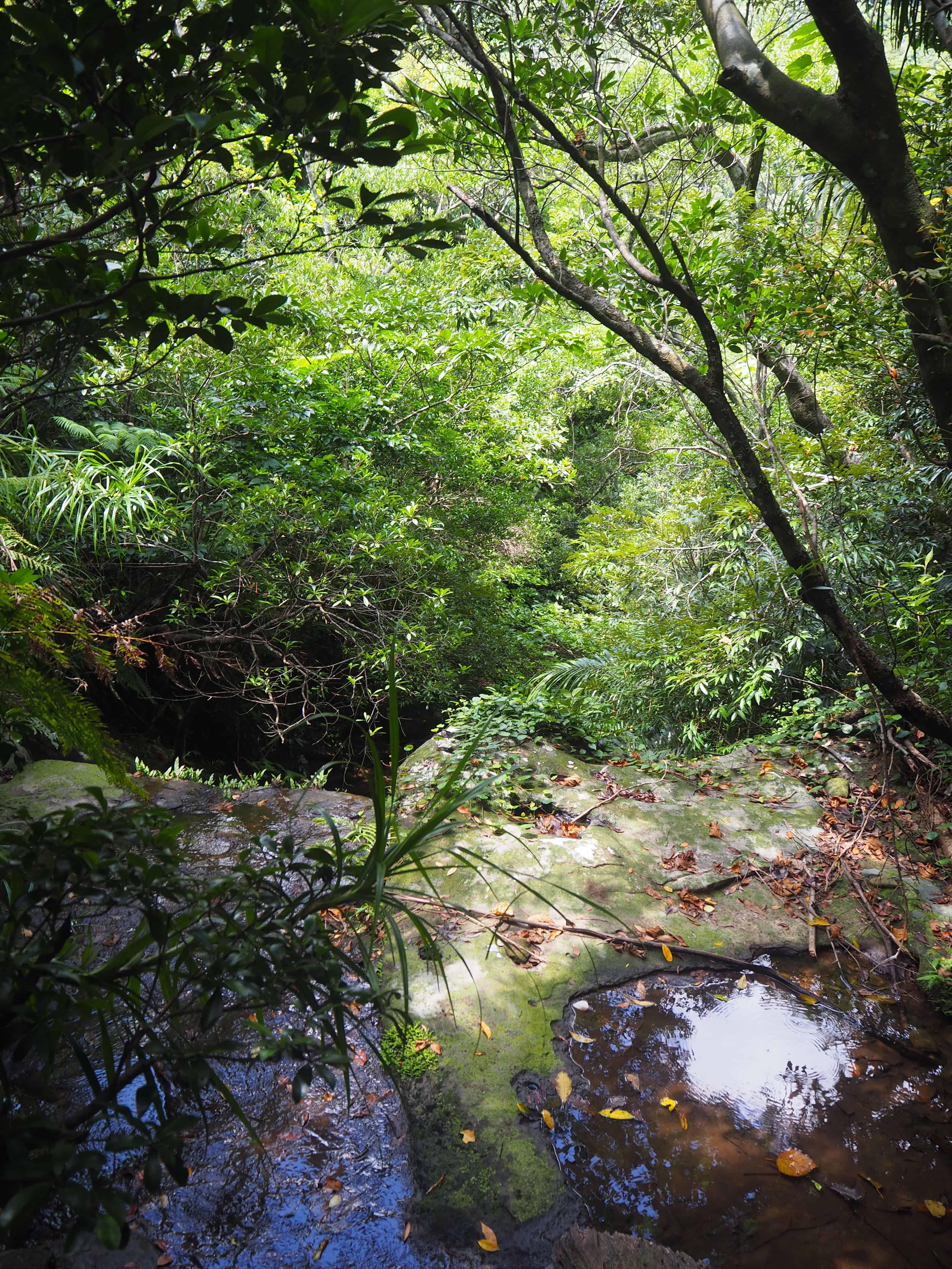 treck dans la jungle