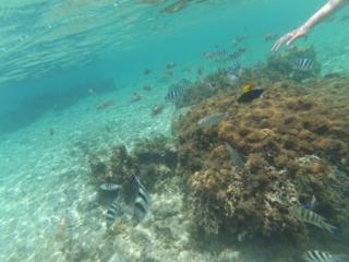 snorkeling, on a l'impression d'être dans un aquarium