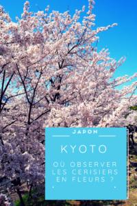 ou observer les cerisiers en fleurs ?