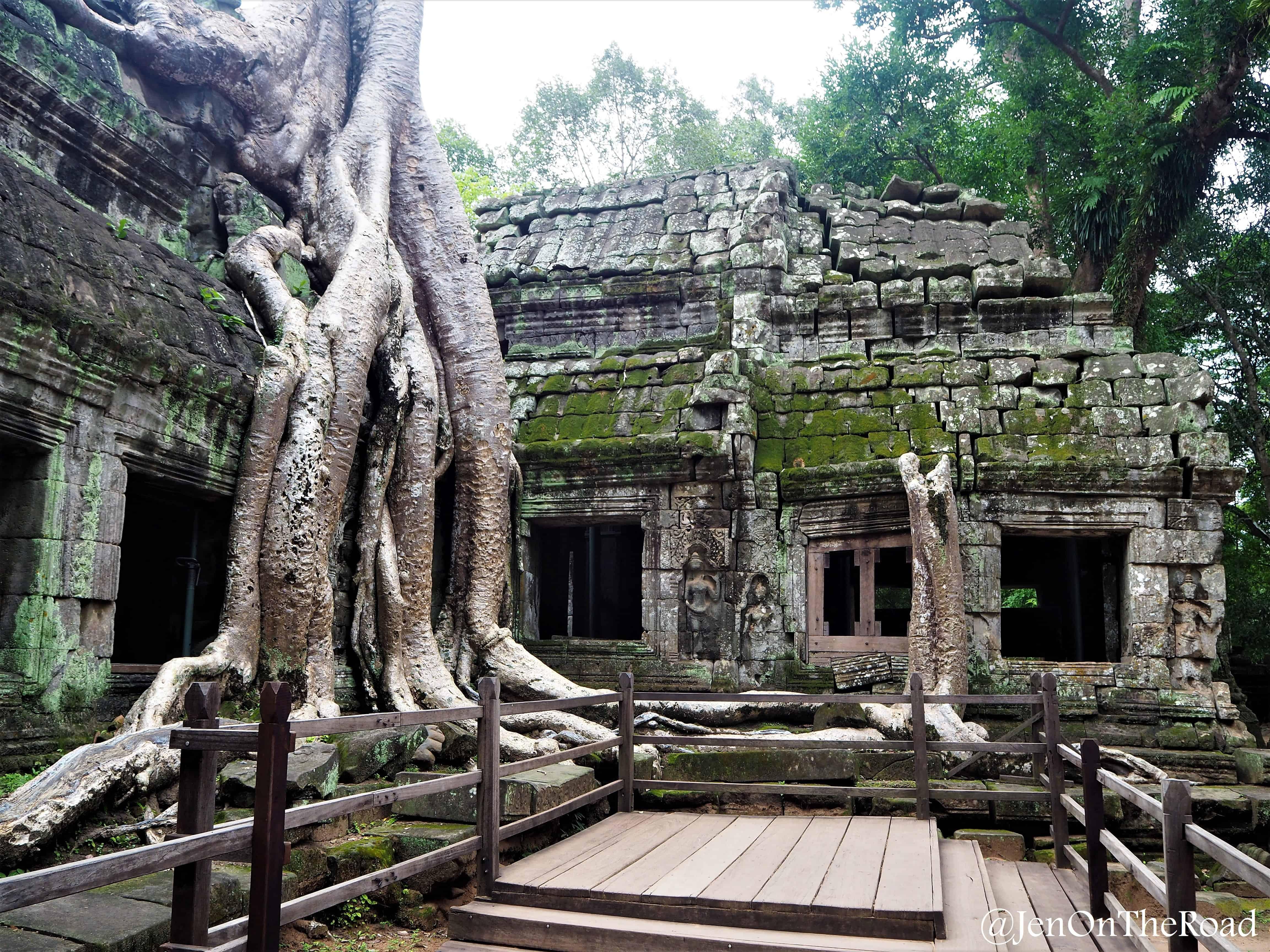 un arbre en plein milieu du temple
