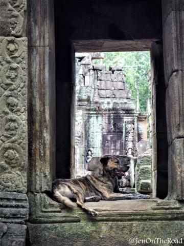 Chien sur la fenetre du temple