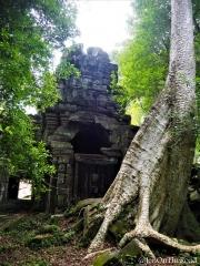 temple et arbre